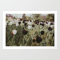 Tulips in Germany Art Print