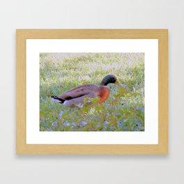 Just Ducky Framed Art Print