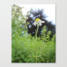 Lonely Flower Canvas Print