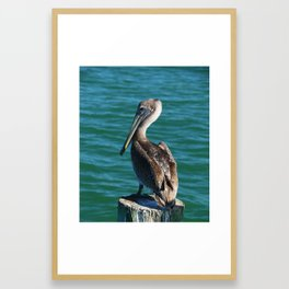 Pelican On A Pole Framed Art Print