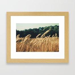 grain field Framed Art Print