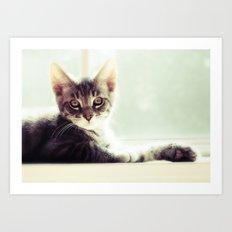 Tabby Kitten in a window Art Print