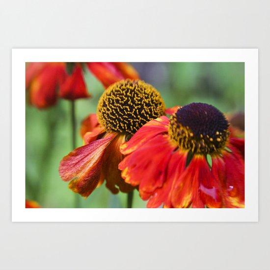 Orange in Flowers Art Print