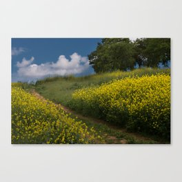 Almaden Meadows' Mustard Blossoms Canvas Print