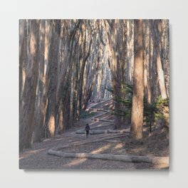Andy Goldsworthy Wood Line, San Francisco Photography, California Fine Art, Woodland, Enchanted Forest Home Decor Metal Print