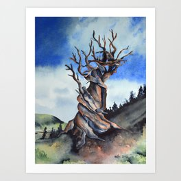 Bristlecone Art Print