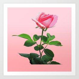 Pink Rose in Bloom Art Print