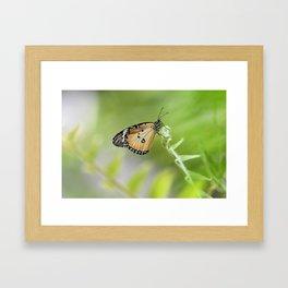 """""""Butterflies Are Free"""" Framed Art Print"""
