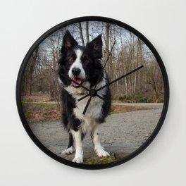 Border Collie Loving Life  Wall Clock