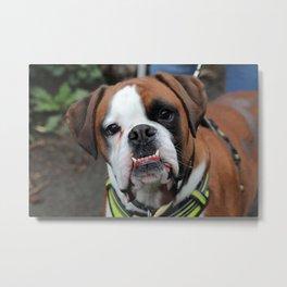 Boxer dog friend Metal Print