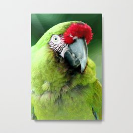Green Macaw Metal Print