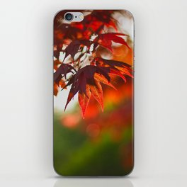 Indian Summer III Season Autum red Leaves Fall iPhone Skin