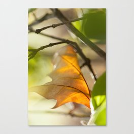 Winter leaf in the wind Canvas Print