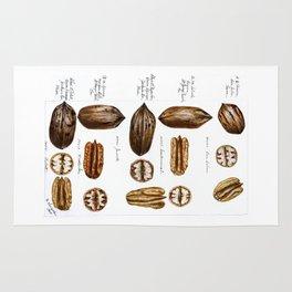 Nuts - Fruit Illustration Rug