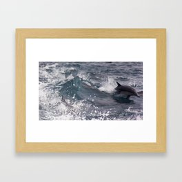 Wake Riding Common Dolphins Framed Art Print