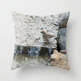 Water (Chipping Sparrow) Throw Pillow