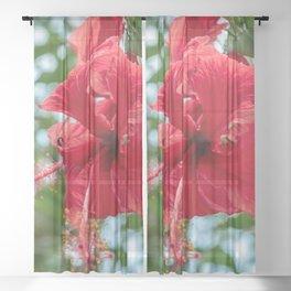 Wildflower Stamen // Beautiful Red Flower in Full Bloom Close Up Macro Photograph Sheer Curtain