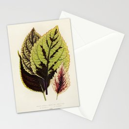 Coleus Murrayi engraved by Benjamin Fawcett (1808-1893) for Shirley Hibberd's (1825-1890) New and Ra Stationery Cards