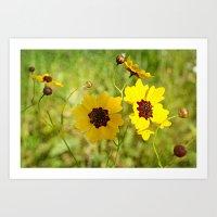 Arizona Sun Blanket Flower   Gaillardia Art Print