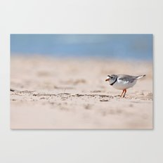 Great Lakes Piping Plover Canvas Print