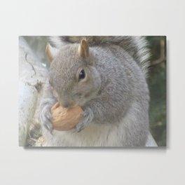 CUTE SQUIRREL EATING A NUT Metal Print