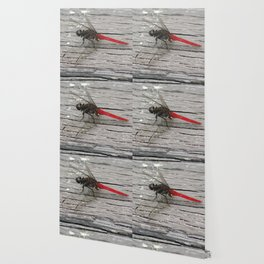 Dragon-Fly with red tail Illustration Wallpaper