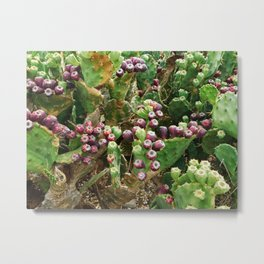 spiny plants Metal Print