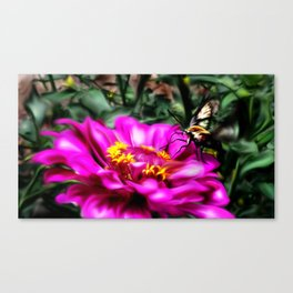 Snowberry Clearwing Canvas Print