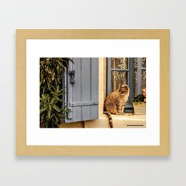 Le petit chat Framed Art Print