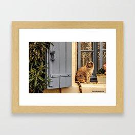 Le petit chat Framed Art Print
