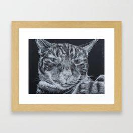 Saucy Cat Framed Art Print