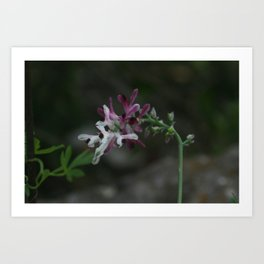Earth Smoke Flower Art Print