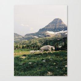 Montana Mountain Goat Family Canvas Print