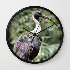 Bird of Colors Wall Clock