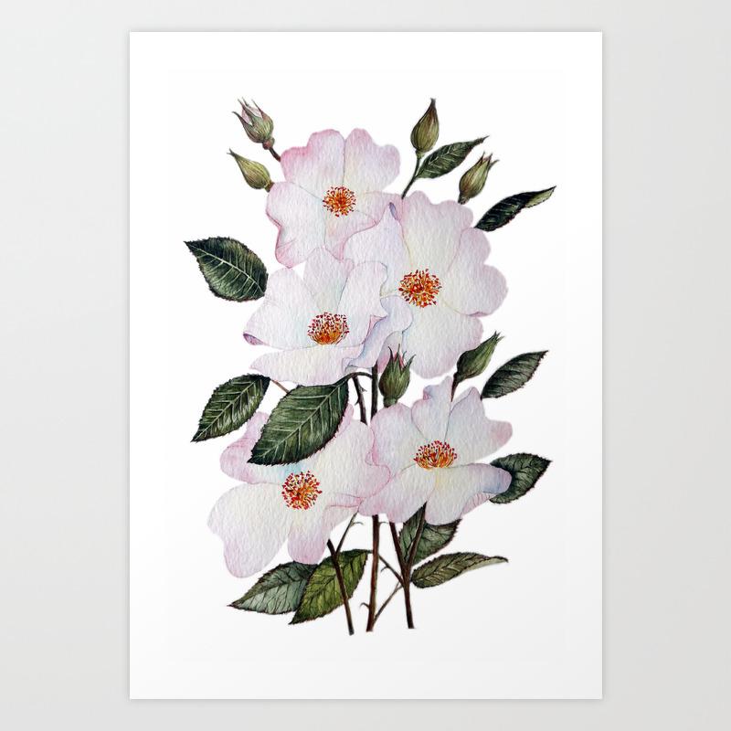 wildroses art prints society6