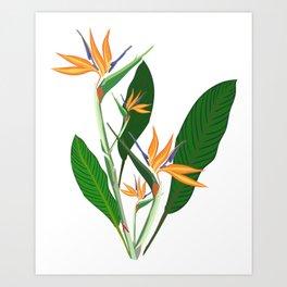 Birds of paradise Flower Art Print