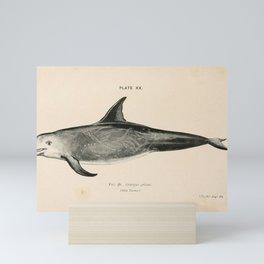 W Sidney Berridge - A Book of Whales (1900) - Figure 38: Risso's Dolphin Mini Art Print