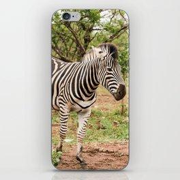 Lone zebra in the African bush iPhone Skin