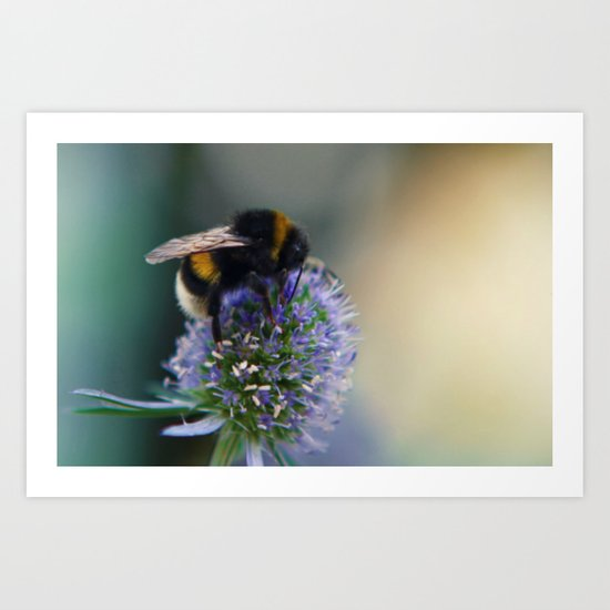 Buzz fine art photography Art Print