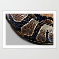 monty python Art Prints featuring Python by Elaine C Manley