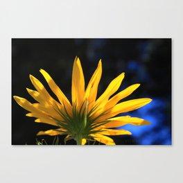 Backwards Sunflower Canvas Print