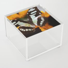 Summer Butterfly Acrylic Box