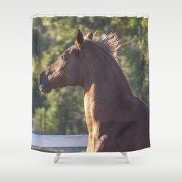Arabian Horse  Shower Curtain