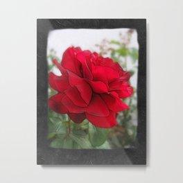 Red Rose Edges Blank P4F0 Metal Print