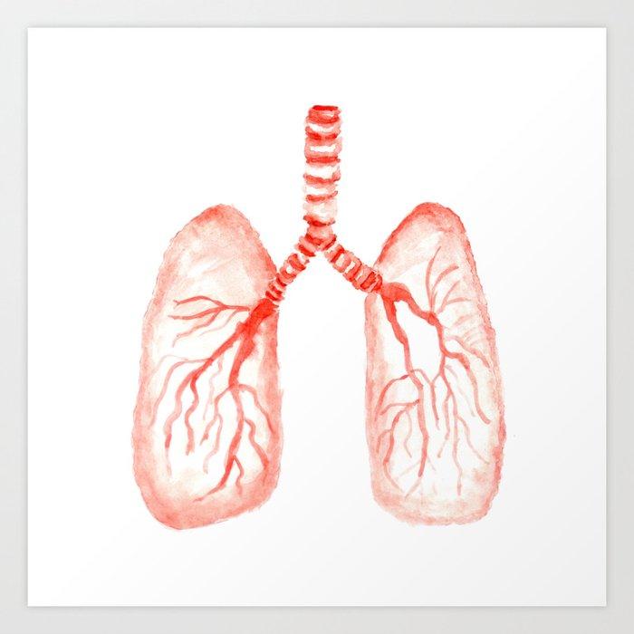Human lungs Kunstdrucke