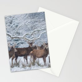 Red deers  from wintry Killarney National Park Stationery Cards