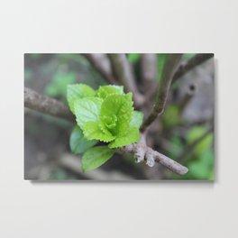 Rosa Verde Metal Print
