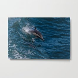 Surfing Dolphin Metal Print