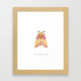 Rosy Maple Moth Framed Art Print