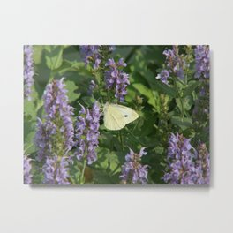 White on Purple Sage Snapshot Photography Metal Print